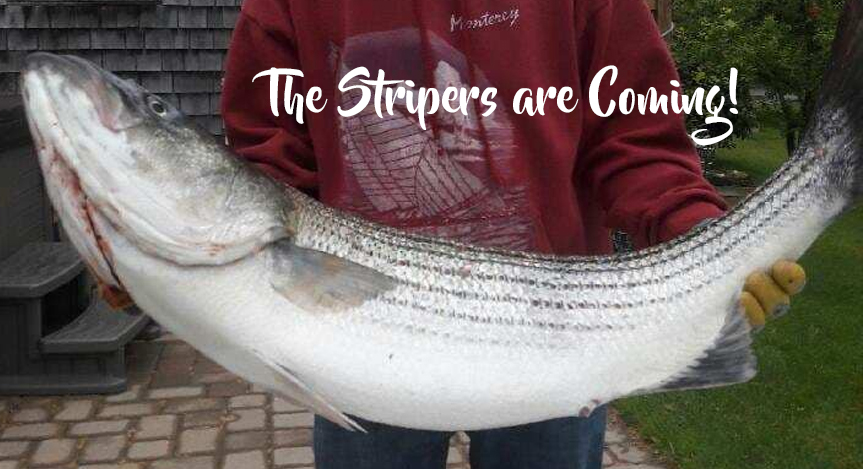 WestPort Point Fishing Charters